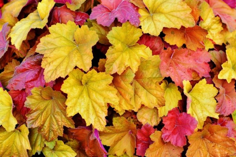 Jak na podzimní únavu? Přečtěte si 5 tipů, jak si podzim užít!